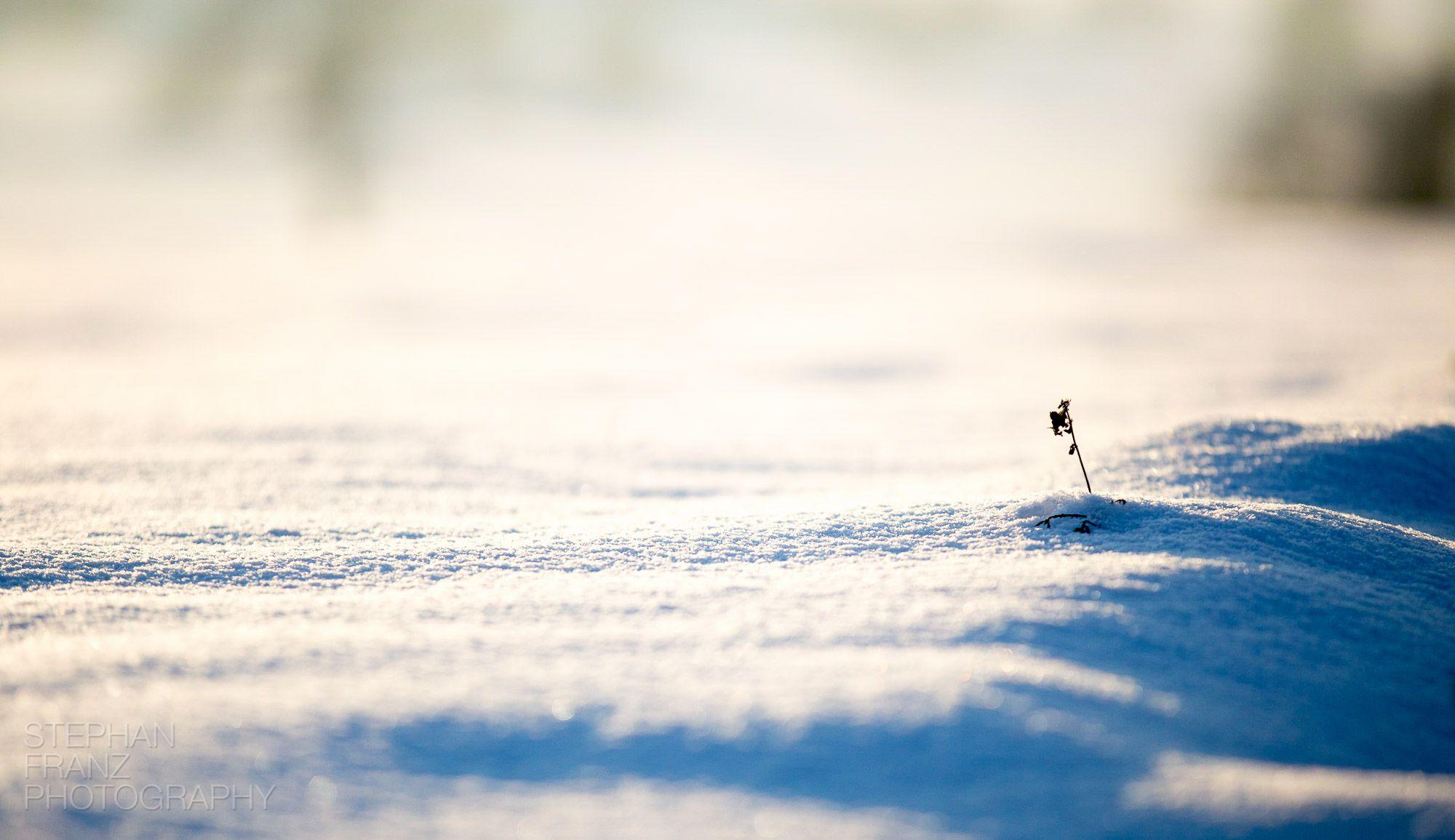 Winterspaziergang mit Angela in Beyharting bei Tuntenhausen im Alpenvorland in Bayern - Fotograf Stephan Franz Photography aus Rosenheim-4
